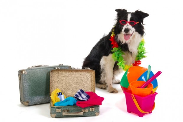 acessórios caninos