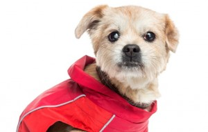 acne em cães
