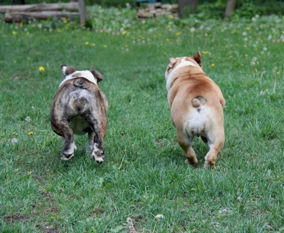 cães interagindo