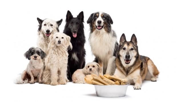 cães e ossos