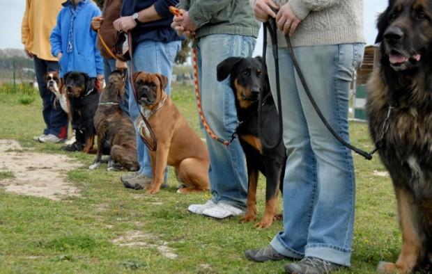 cães treinados