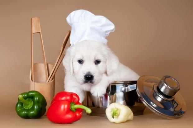 cão comendo pimentão
