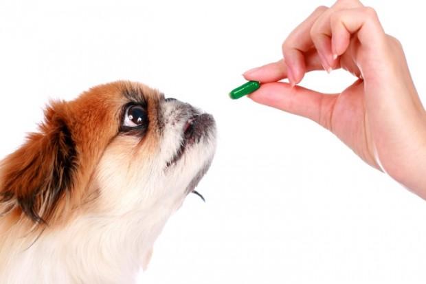 demodicose em cão