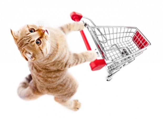 gato no pet shop