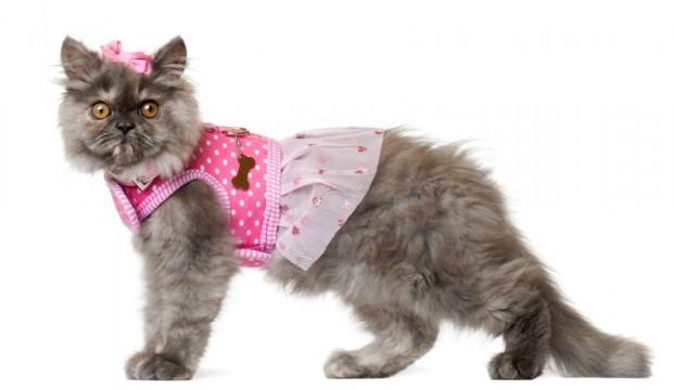 moda felina