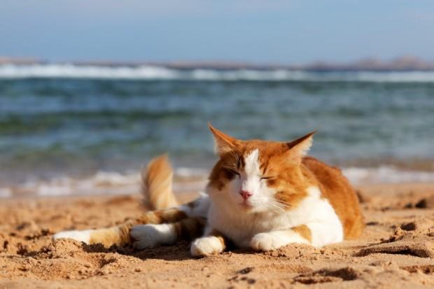 protetor solar para gatos