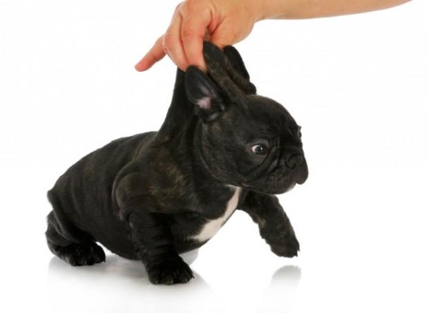 punição para cachorro