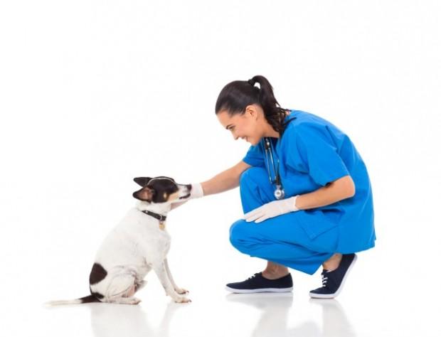 veterinário cuidando de cachorro